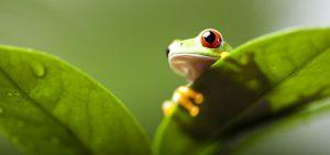 agsense_atrazine_amphibians-and-atrazine-768x361